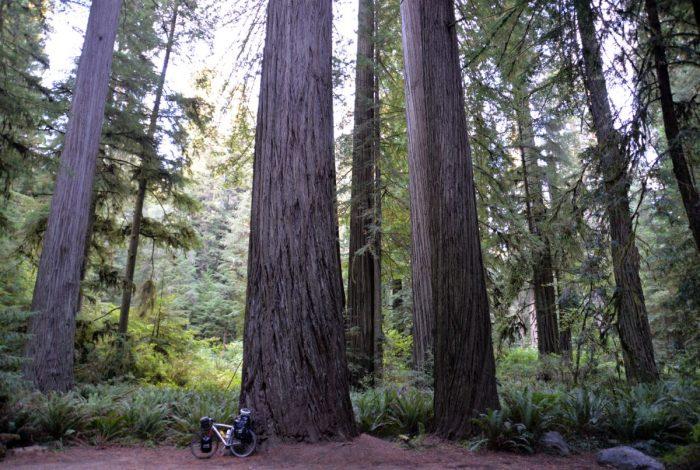 Veľké stromy Kalifornia